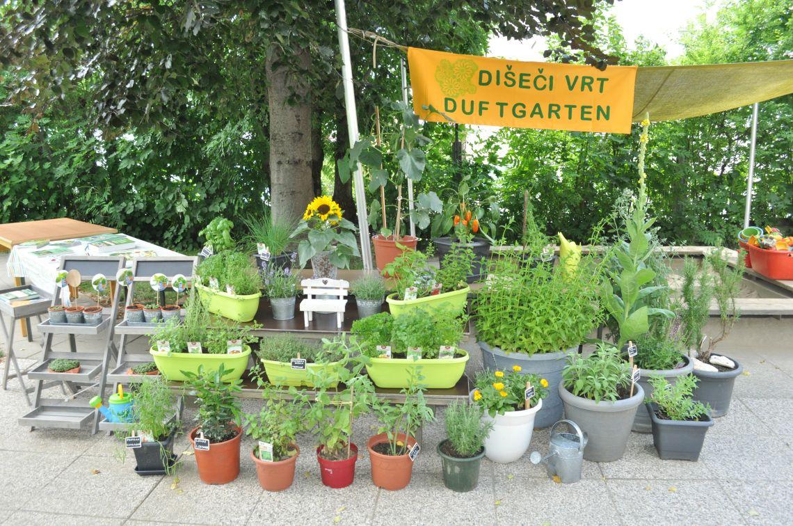 Sommerfest - der Kräutergarten